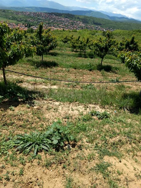 farm land property vetren - 7