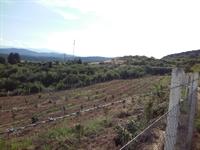 garden farm property land - 2